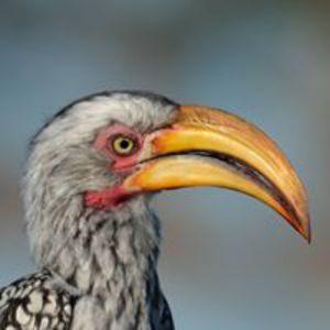 Patrick Avet L'Oiseau