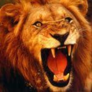 liongate